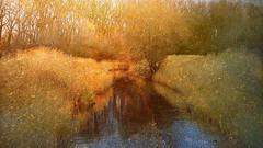 """Be kind to everything that lives"". (genevieve van doren) Tags: damme flanders westvlaanderen water eau trees arbres textures"