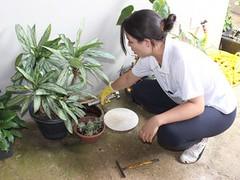 Bom Despacho reforça ações de combate ao Aedes aegypti (portalminas) Tags: bom despacho reforça ações de combate ao aedes aegypti
