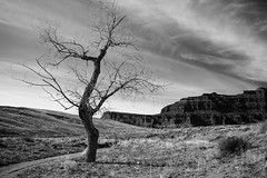 Lonely Tree On A Road To Canyonlands National Park, Utah (thedot_ru) Tags: tree lonely dry sky clouds skyporn grass mountains formations blackandwhite bw utah canyonlandsnationalpark canyon travel adventure usa mood canon5d 2015