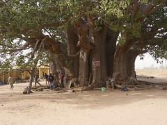 SenegalFromDeltaSaloumToMbour003 (tjabeljan) Tags: mbour moskee mosque termite termiet boabab senghor senegal africa afrika