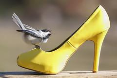 Mad about Heels! (dshoning) Tags: odc balance heels shoe yellow chickadee