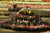 flowers_457 (Manohar_Auroville) Tags: pondicherry flowers exhibition girls beauty tamil women compositions lights fountain fruits vegetables garden botanical manohar luigi fedele