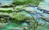 """EL VIAJE DEL AGUA - Terrazas en el río Urederra (ANDROS images) Tags: andros images photos fotos fotoandros """"androsphoto"""" """"fotoandros"""" lugares places """"sitiosespeciales"""" """"franciscodomínguez"""" interesante naturaleza """"naturalezaviva"""" """"amoralanaturaleza"""" """"imágenesdenuestromundo"""" """"sólotenemosunatierra"""" """"planetatierra"""" """"amarlatierra"""" """"cuidemoslatierra"""" luz color tonos """"portierrasespañolas"""" """"nuestro """"unahermosatierra"""" """"reflejosdeluz"""" pasión viviendo """"pasiónporlafotografía"""" miradas fotografías """"atravésdelobjetivo"""" """"elmundoenimágenes"""" pictures androsphoto photoandrosplaces placesspecialsites interesting differentnaturelivingnature loveofnature imagesofourworld weonlyhaveoneearthplanetearth foracleanworldlovetheearth carefortheearth light colortones onspanishterritoryourworld abeautifulearth lightreflection """"living passionforphotographylooks photographs throughthelens theworldinpicturesnikon """"nikon7000"""" grupodemontañairis androsimages franciscodomínguezrodriguez urederra ríodecolores"""