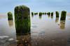 Stump Fish (Matt West) Tags: sea ocean spawn fish rockpool