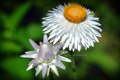 私の庭 (alice 240) Tags: macro flowers insect nature garden nikon ngc nationalgeographic flickr flora poetry magic dream 私の庭