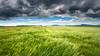 ile-284 (Tasmanian58) Tags: thunder clouds sky wheat field landscape orleansisland nikon rokor quebec canada