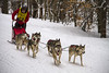 Tug Hill Challenge Dog Sled Races - 2018 (Matt Champlin) Tags: dog doggos doggies sled winter sledding dogsleds dogsledding tughill tughillchallenge canon 2018 noelle fun outdoors winona sleds tug adventure cny newyork upstatenewyork life nature woods woodland run race racing huskies