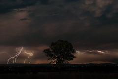 Lightning tree (Shawy in Brisbane) Tags: tree night queensland lightning mutdapilly storm lightningtree clouds