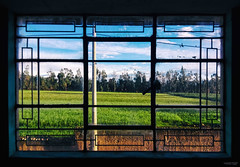 Cocooning (Berly Fuster [Theretsuf]) Tags: ventana rejas campo paisaje cultivo muro poste nubes cielo arboles cable window bars countryside landscape culture wall post clouds heaven trees fenêtre barres terrain paysage paroi pôle les nuages paradis arbres câble fenster feld landschaft anbau wand stange wolken himmel bäume kabel kevinncajaleon kevin berly fuster theretsuf huancayo