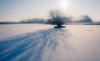 Empel - Kanaalpark 3733 (Ingeborg Ruyken) Tags: dropbox vorst februari winter boom february flickr snow sneeuw 500pxs ijs sun empel tree koud zon ice cold ochtend natuurfotografie morning bevroren frost frozen