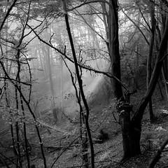 light on (my analog journey) Tags: 500cm fujineopanacros100 mediumformat movformatcom hc110 dilutionb filmdev:recipe=11735 kodakhc110 film:brand=fuji film:name=fujineopanacros100 film:iso=100 developer:brand=kodak developer:name=kodakhc110 nature bnw blackwhite germany ahrtal