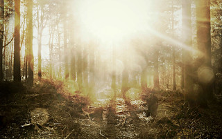 Canon EOS 60D & PicMonkey - Waldeinsamkeit - Deep in the woods I saw the light (Crop)