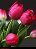 "Tulipanes Rojos 2018 (MIMAMOR) Tags: ""excelllentsflowers"" ""mimamorflowers"" ""flickrflorescloseupmacros"" ""flowersarebeautiful"" "" mixedflowers"" ""faunayfloradelmundo"" mimamor flowers flores ""magicmomentsinyourlifelevel1"" ""magicmomentsinyourlifelevel2"" ""magicmomentsinyourlifelevel3"" ""magicmomentsinyourlifelevel4"" ""onlythebestofflickr"" ""thebestofmimamor'sgroups"" ""nature'selegantshots"" ""napture'splus"" ""panoramafotografico"" ""flickr'sportal"" ""natureandpeopleinthenature"" ""theoriginalgoldseal"" ""topshots"" ""photosandcalendar"" greatshotss"""