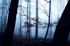 Nightlight forest (Gruenewiese86) Tags: harz nebel wald wernigerode canon6d canon 6d forest forestscape fog foggy 35mm 35 germany baum holz park himmel landstrase