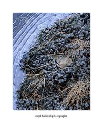 Loch Tulla (Nigel Halliwell) Tags: scotland ice blue ebony45s velvia 5x4 film