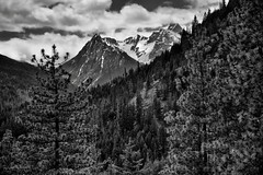Snowcapped Mountain Peaks of Agnes Mountain and the Ptarmigan Crest (Black & White, North Cascades National Park Complex) (thor_mark ) Tags: agnesmountain azimuth231 blackwhite bluesskieswithclouds capturenx2edited cascaderange centralnorthcascades colorefexpro day5 evergreentrees evergreens hiketohowardlake hillsideoftrees junctionmountain lakechelannationalrecreationarea landscape lookingsw mountainpeak mountains mountainsindistance mountainsoffindistance mountainside nature nikond800e northcascades northcascadesnationalparkcomplex northcascadesnationalparkservicecomplex outside pacificcresttrail pacificranges partlycloudy portfolio project365 ptarmigancrest rollinghillsides silverefexpro2 snowonfaroffmountainpeaks snowcapped sunny talltrees trees triptonorthcascadesandwashington lakechelannationalrecreation washington unitedstates