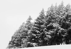 _MG_1796 (G.Corsand) Tags: art 50mmf14 art50mm sigma canon 5dmkiii beaujolais blackandwhite neige snow photographer photographe photo paysages pleinformat photography 24x36 50mm standart winter white wintercolor brume brouillard digital 35mmfullframe fullframe group image iso manuel manualfocus manual mount reflex mkiii lens landscape lightroom manuelfocus numérique noiretblanc objectif wood sapin contraste frost
