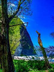 Hawaii-WaipioValley-71.jpg (Chris Finch Photography) Tags: jungle hawaiiphotography waipio taro waipiovalley hawaii landscapephotographs landscapephotography photographs chrisfinch wwwchrisfinchphotographycom chrisfinchphotography utahphotographer tarofarms bigisland tarofarm tropical valley