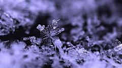 Pascal Bonnet-Art Nat La reine des neiges (shynyphotographe) Tags: reinedesneiges neiges snow gelée givre macro artnaturelle hivers hiver winter canon 70d art sculpture naturelle