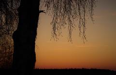 Hanging around (STTH64) Tags: sunset tree sky dusk sea seaside snow ice