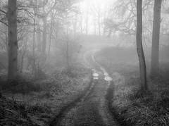 The Track (jactoll) Tags: arrow coldcomfort arrowlane warwickshire winter woods track trees fog foggy mist misty moody monochrome mono bw black white landscape sony a7ii jactoll