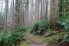 Trail, weaving its way through tall trees (rozoneill) Tags: cape mountain berry creek siuslaw national forest hiking oregon florence princess tasha scurvy ridge trail nelson coastal