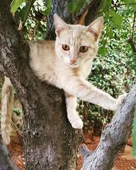 A funny kitten at my garden (Zaid Horani) Tags: cat cats kitten amman jordan zaidhorani زيدالحوراني