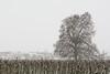 Neva a Tornabous! | Snow in Tornabous (Ramon Oromí Farré @sobreelterreny) Tags: neucat neurac1 snow neu nieve tornabous planadurgell planadelleida arbres árboles trees climatologia meteorologia meteo clima hivern invierno winter now new flickr tamron nikon nikkor d7100 provínciadelleida lleida catalunya catalonia catalogne cataluña outdoor paisatges landscape rural outside hiking pelscamins white blanc blanco nature natura naturaleza exterior weather