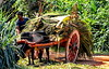 Ox-cart in Sri Lanka (gerard eder) Tags: world travel reise viajes asia southasia srilanka ceylon oxcart rurallife rural countryside paisajes panorama landscape landschaft landwirtschaft agricultura agriculture people peopleoftheworld animals tiere animales outdoor natur nature naturaleza