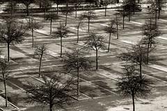 posto auto (Rino Alessandrini) Tags: posteggio vuoto geometrie linee alberi file rami urbano periferia parcheggio asfalto strada parking lot geometry lines trees rows urban suburbs asphalt road