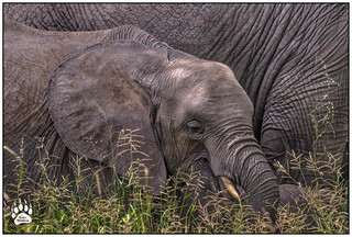 Tanzania Elephants 021916-EDIT-W.jpg