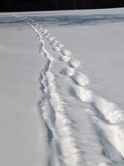 Pot v ... / Path to ... (Damijan P.) Tags: zima winter sneg snow slovenija slovenia prosenak