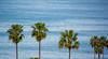 DSC_6536.jpg (bobosh_t) Tags: sunsetcliffs california pacificocean ocean