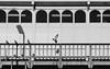 Berlin (mezitlab) Tags: blue berlin 2017 2017december canon canoneos600d 24mmpancake travel evs germany europe photography orsivarga rovar mezitlab bnw blackandwhite blackandwhitephotography bird street pigeon fly