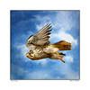 The Prairie Falcon ~ Original Poem by John R. Williams (Johnrw1491) Tags: birds raptors falcons prairie flight fine art clouds nature wildlife poetry poem literary creative