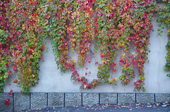 The wall (Baubec Izzet) Tags: baubecizzet pentax colorful leaves autumn street