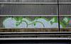 graffiti amsterdam (wojofoto) Tags: amsterdam graffiti nederland netherland holland snelweg highway boarding throws throwups throw wojofoto wolfgangjosten