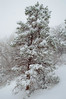 Snow Covered Tree (twinblade_sakai340) Tags: adventure canyon cold cool creek freezing frozen fun hike hiker hiking ice icecold landing landscape mountain mountains nature outdoor outdoors park river slotcanyon utah water wet winter