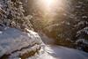Winter Wonderland II (Marcel Cavelti) Tags: bq0a2850bearb winter wonderland grisons switzerland swiss alps trail forest trees landscape snow