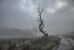 The gnarled old tree in the mist - HFF explore 10.2.18 (Jo Evans1) Tags: fence friday hff national botanic gardens wales iconic tree mist atmospheric