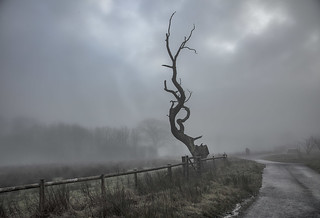 The gnarled old tree in the mist - HFF explore 10.2.18