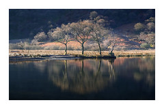 Still - in explore (Dave Fieldhouse Photography) Tags: sunrise morning winter still reflections reflection trees tree landscape cumbria crummockwater crummock water lake lakedistrict lakes nationalpark fuji fujixt2 fujifilm wwwdavefieldhousephotographycom countryside outdoors calm smooth dawn