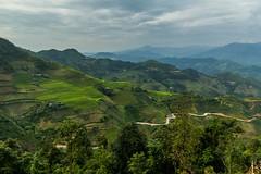 Zpět mezi terasami (zcesty) Tags: vietnam23 terasa silnice rýže pole krajina hory vietnam dosvěta hàgiang vn