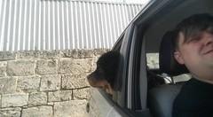 23905592_10214487629291442_59737780269894050_n (natedetienne) Tags: ash tibetan mastiff puppy tm