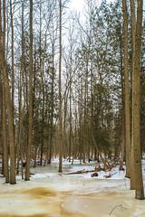 Baird Creek-8 (KLMP) Tags: greenbay wi bairdcreek cofrinmemorialarboretum nature landscape winter snow ice redfin brown portrait fortleavenworth ks usa
