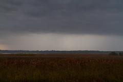 Dixon_JB_363_3765 (Joanne Bouknight) Tags: bunkhouse dixonwaterfowlrefuge illinois mist morning rain storm thewetlandsinstitute yard