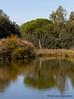 #árbol #tree #2016 #doñana #huelva #andalucía #españa #spain #viajar #travel #viaje #trip #paisaje #landscape #agua #water #reflejos #reflexes #naturaleza #nature #aventuras #adventures #photography #photographer #picoftheday #canonistas #canonimagen #Can (Manuela Aguadero) Tags: trip landscape canoneos7d españa canonistas 2016 adventures water reflexes andalucía nature viajar spain aventuras canonimagen doñana picoftheday manuelaaguadero canonforum photography tree paisaje huelva reflejos photographer canon7d agua árbol naturaleza viaje travel