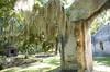 DSC_8874 (Tripping On Change) Tags: southcarolina harborisland island beaufort cemetery ocean beach shrimpshack alligator mussels nature