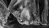 Eisbildung im Bach (jkiter) Tags: brilon sauerland deutschland sw bach natur eis germany nature schwarzweis bw blackandwhite einfarbig ice monochrome