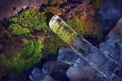 As cold as ice. As warm as the sun. (Gudzwi) Tags: eis ice moos moss grün blau gefroren frozen frosty frostig sonnenlicht sunlight eiszapfen icicle stein stone 7dwf 7dwfwednesdaysmacroorcloseup macro makro closeup macroorcloseup blur unschärfe cold kalt warm winter